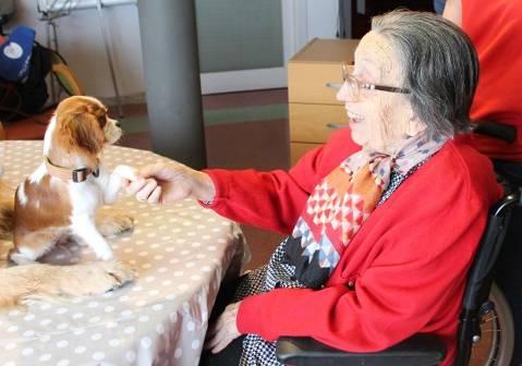 Residencias y centros para gente mayor