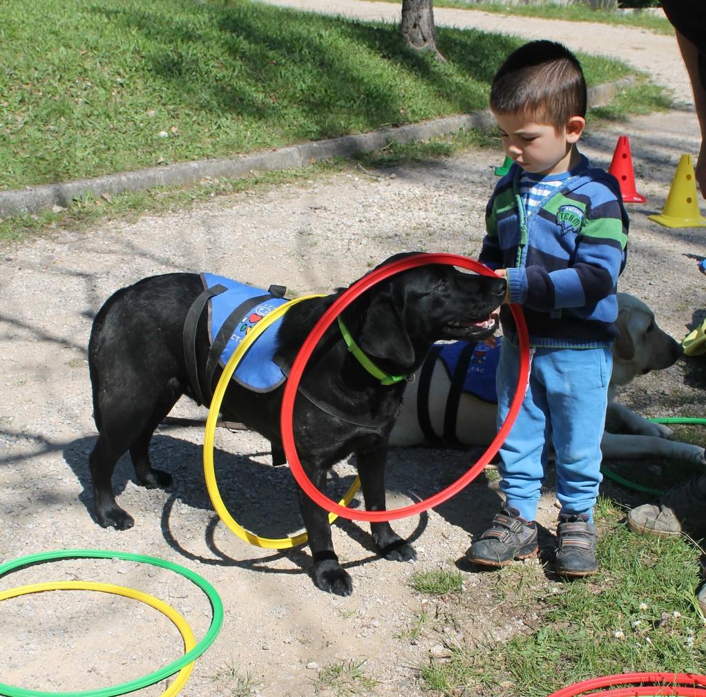 Intervencions Assistides amb Gossos
